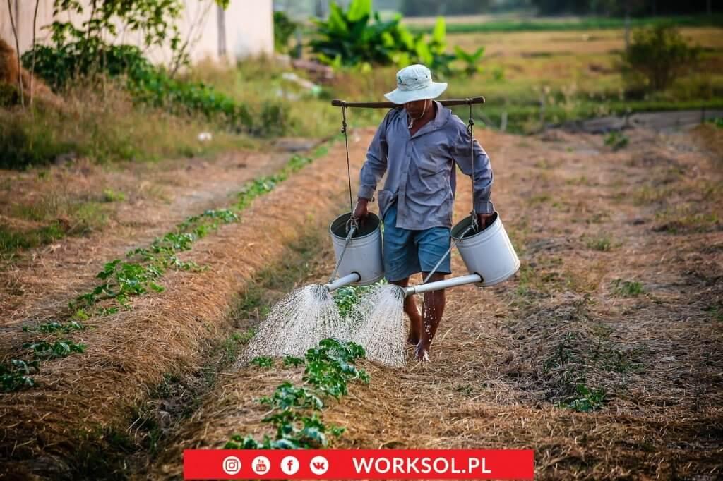 pracownicy z Wietnamu