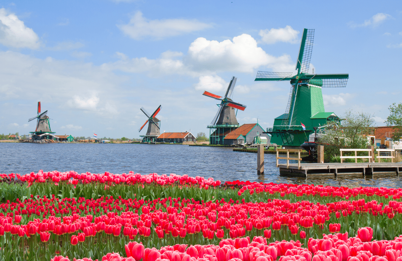 Как не попасть на мошенников? Фальшивая работа в Голландии